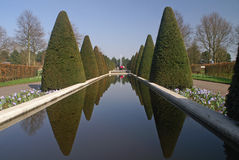 Yew tree reflection at Keukenhof. Reflection of yew trees in a basin at the Keukenhof, the famous flower bulb exhibition royalty free stock image