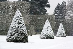 Yew trees under snow (near Paris France) Royalty Free Stock Photography