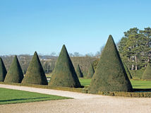 Yews trimmed cone,  summer (France) Royalty Free Stock Images