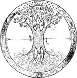 Coloring Yggdrasil: the celtic tree of life vector. Yggdrasil is the celtic tree that represents life with a lot of braches and roots. You can see this mandala royalty free illustration