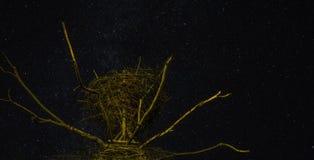 Yggdrasil in de nacht Royalty-vrije Stock Afbeelding