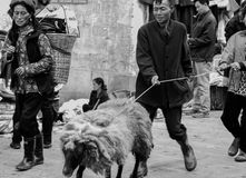 Yi family pulling sheep in rural  markplace Royalty Free Stock Photography