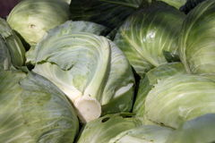 Yield of cabbage Stock Photography
