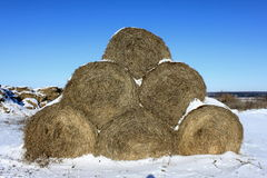 The yield of hay in the winter. In the snow Royalty Free Stock Image