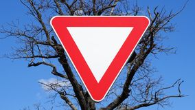 Yield sign on a background an old tree. Latvia royalty free stock photos