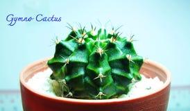 Yimno del cactus Fotografía de archivo libre de regalías