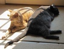 Yin en Yang Cats in de Zon stock fotografie