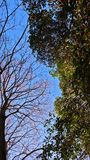 Yin en yang van bomen in de wintertijd stock foto's