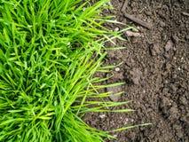 Yin et Yang - herbe et terre Photos libres de droits