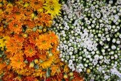 Yin Yan från de lantliga blommorna royaltyfria bilder