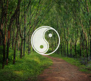Yin Yang Balance Contrast Opposite Religion Culture Concept Royalty Free Stock Photography