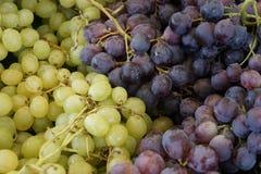 Yin Yang biali i czerwoni winogrona Obraz Stock