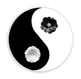 Yin yang. Black flower and white flower. Mallow. Flat lay. White flower and black flower on black white background. Flat lay. Mallow Royalty Free Stock Photo