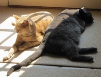 Yin and Yang Cats in the Sun. 20120628. Two cats one orange, one gray sleeping as if in the yinyang position in the sun. Baltimore, MD, USA. Indoors stock photography