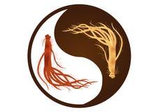 Yin yang ginseng, ginseng van Korea, oude traditionele geneeskunde, rode en witte ginseng Stock Foto's