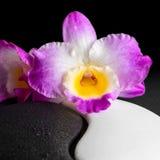 Yin-Yang-Symbol der Steinbeschaffenheit mit Orchideenblume auf Tauschwarzem Stockfotos