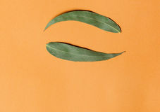 Yin yang symbol from green eucalyptus leaves on orange background. Flat lay. Royalty Free Stock Photos