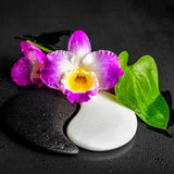 Yin-Yang symbol of stone texture with green leaf Calla lily and Royalty Free Stock Image