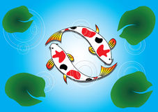 Ying Yang Koi Fish. Swimming on Lotus Pond. This vector file can be separated and rearranged Royalty Free Stock Photos