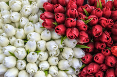 Ying Yang tulipany Fotografia Royalty Free
