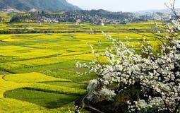 Yinzai au printemps Photos libres de droits