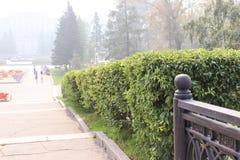 Żyje ogrodzenie Fotografia Stock