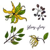 Ylang-ylang. Set of hand drawn objects isolated on white background stock illustration