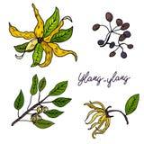 Ylang-Ylang Upps?ttning av hand drog objekt som isoleras p? vit bakgrund stock illustrationer