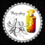 Ylang-ylang Photos libres de droits
