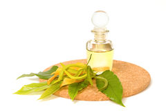 Ylang-ylang aroma massage oil. Isolate Stock Image
