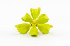 Ylang-Ylang Flower. Stock Photos