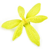 Ylang-Ylang flower Royalty Free Stock Image