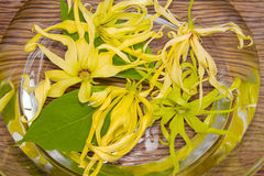 Ylang-ylang flower in water for day spa Royalty Free Stock Images