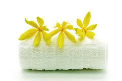 Ylang-Ylang flower Stock Images