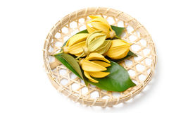 Ylang-Ylang flower,Yellow fragrant flower. On a white background Stock Image