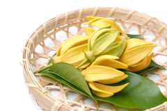 Ylang-Ylang flower,Yellow fragrant flower. On a white background Stock Photography
