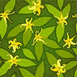 Ylang-ylang seamless Stock Photography
