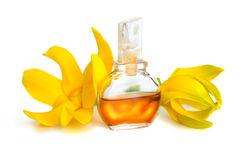 Ylang-Ylang istotny olej z kwiatami fotografia stock