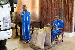 Ylang ylang, Nosy Be, Madagascar. Malagasy men are weighing ylang ylang flowers sacs at the distillery at Nosy Be, Madagascar. The cultivation of cananga tree is Royalty Free Stock Images