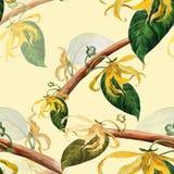 Ylang-ylang Papier peint sans joint Photographie stock