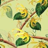 Ylang-ylang wallpaper Fond sans couture Image libre de droits