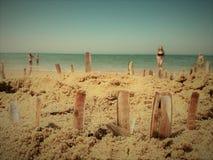 Żyletek skorupy wtykali w piasku na słonecznym dniu Obraz Stock