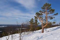 Ylläs Lapland Arkivfoton