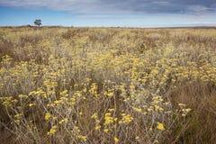 Ymnighet av blommor i cerradobiomen Serra da Canastra Nat Arkivfoton