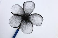Yo dibujo de lápiz de flores Fotos de archivo