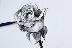 Yo dibujo de lápiz de flores Imagen de archivo
