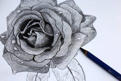 Yo dibujo de lápiz de flores Imágenes de archivo libres de regalías