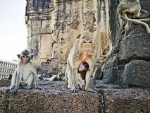 Yod Prang Sam Tempel lopburi Thailand-Affe-Tempel Asien Stockfotografie