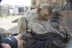 Yod Prang Sam Tempel lopburi Thailand-Affe-Tempel Asien Stockfotos
