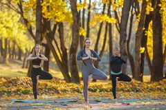 Group of Young women doing Yoga action exercise healthy in the park. Health lifestyle concept. royalty free stock photo